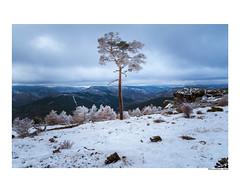 (david Ramalleira) Tags: davidramalleiraphotography davidramalleira d700 winter invierno snow nieve nikon nature naturaleza natureart naturephotography naturesfinest naturesart natura landscape landscapes tree trees paisaje