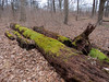 mossy logs add color to January (natureburbs) Tags: dukefarms january winter newjerseynature moss treetrunk woods