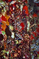 ZEUS's PALETTE (ferlopez) Tags: underwater animal marinelife cnidarian softcoral snowflakecoral wailea mauihawaii usa