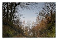 Weerspiegeling (reflection)in water , zuigerplasbos Lelystad