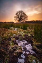 Frost ... (Matthias Hertwig) Tags: matthias hertwig frost spreewald baum sonnenaufgang langzeitbelichtung natur landschaft brandenburg deutschland sony a6000