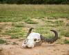 Buffalo skull (-savoche-) Tags: krugerpark mpumalanga southafrica za