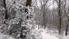 Like A Dream (Daphne-8) Tags: schnee neve nieve neige snow sneeuw bomen trees bäume arbres arboles bosque wald forest woods woud bos forêt winter hiver inverno invierno nature naturaleza landscape paysage landschaft peasaggio paisaje landschap tree