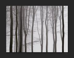 Felsberg1 (OdenWALDfotograf) Tags: wald winter forest trees bäume