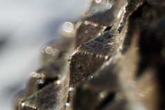 Bubbles and spikes (Aresio) Tags: trioplan meyeroptikgörlitz bubbles abstract macro depthoffield