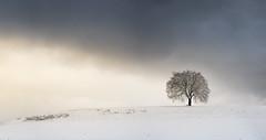 """Und noch ein Bild von """"dem Baum"""" (louhma) Tags: lonely tree einsamer baum snow schnee deutschland d750 clouds colorful ebersberg ebe landschaft cloud cold winter february"""
