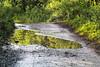 Alaskan summer - Explored (RPahre) Tags: wrangellsteliasnationalpreserve wrangellstelias trail wagonroad reflection alaska summer kennicott mccarthy