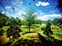 48200 Serendah, Selangor https://goo.gl/maps/uGhDRd5gSGD2  #tree #nature #travel #holiday #trip #Asian #Malaysia #Selangor #serendah #travelMalaysia #holidayMalaysia #树木 #旅行 #度假 #亚洲 #马来西亚 #双文丹 #马来西亚旅行 #马来西亚度假 #green #绿色 #stone #石头 #hutan #公园 #garden #gras