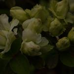 bgr4egrXX20110513a9218.jpg thumbnail