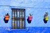 FEnêtre Maroc1962 (ichauvel) Tags: fenétre window murbleu bluewall potsdefleurs plantes flowers couleurs colours exterieur outside décoraitf chefchaouen chaouen chechaouen maroc morocco magreb afriquedunord northafrica voyage travel