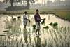 farmer ... (sufihalua) Tags: farmer field foggy morning