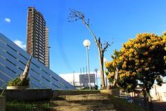 Um canto da cidade (veriparize) Tags: cidade city trees nature natureza bluesky sky praça praçabarãodoriobranco reflexo reflection colors prédios cars sun sunset canon canont5 veridianeparize