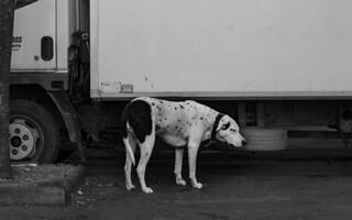 Liege 09.02. 2018 dog at fleamarket