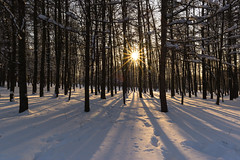 Winter sunset (gubanov77) Tags: sunset sun winter moscow russia landscape nature trees woods parkpobedy поклоннаягора паркпобеды poklonnayahill rays outdoor lighting