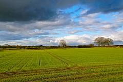 Big clouds near Gnosall (Ugborough Exile) Tags: gnosall stafford staffordshire midlands england uk sony a6300 2018