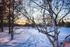 Evening at a park 13 (Kasia Sokulska (KasiaBasic)) Tags: canada alberta edmonton river valley rundle park winter sunset trees
