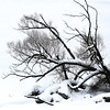 Pre-Driftwood (Brian 104) Tags: tree fallen winter snow ice river