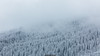 The Mist (Nicola Pezzoli) Tags: dolomiti dolomites unesco val gardena winter snow alto adige italy bolzano mountain nature december mist fog forest corvara badia zoom foggy