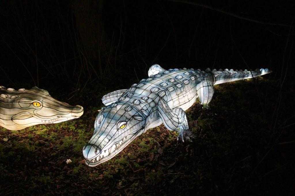 51233da3afc87 Crocodile (drimage) Tags  crocodile wild lights dublin zoo ireland laterns