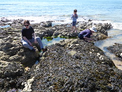 Bracelet Bay, Mumbles (davidmcnuh) Tags: swansea glamorgan mumbles wales rosieb ursulab gaynorb coast rockpools