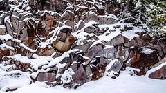 Rock Cliff (rich trinter photos) Tags: mountrainier winter packwood washington unitedstates us landscape cliff trinterphotos alpine naturalpattern rickseckerpointroad