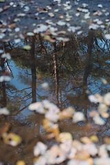 Reflexion faite... (tonic_witch) Tags: film kodakportra400 planart1450 contaxaria c41