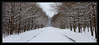 Winter run (smooth.bokeh) Tags: rambouillet courseàpied hiver neige running snow trail winter share