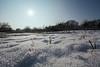 Eingeschneit (Lilongwe2007) Tags: wakendorf schleswig holstein deutschland winter schnee eis frost sonne kälte sonnenstrahlen natur landschaft pflanzen gras