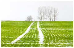 Neige dans les sillons (Pascale_seg) Tags: paysage landscape country countryside champ neige winter hiver sow sillon campagne vert green white blanc brume mist misty moselle lorraine france nikon tree sky
