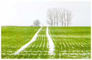 Neige dans les sillons