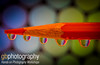 A bit of color after so much violence in Parkland (gbuten) Tags: color orange pencil reflection droplet water micro