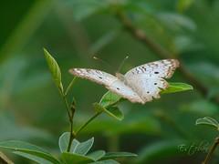 Butterfly (Esteban 507) Tags: butterfly mariposa naturaleza nature leaves gardening garden photography photographer