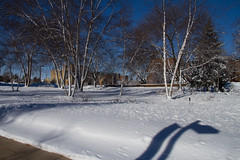 2017 New Student Move In Day-30.jpg (Gustavus Adolphus College) Tags: campus winter pc anna brown photography olin snow trees campusinwinter pcannabrown winterphotography