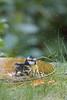 Mésange Bleue (MARTIN FRED) Tags: cyanistes caeruleus passereaux paridés paridae nikond800 sigma150600sport birds oiseaux jardin nature faune