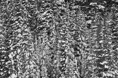 Heavy Snow (claeshields) Tags: winter snow cold storm trees pines forest weather bw blackwhite utah