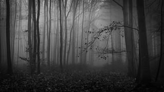 Willkommen im Düsterwald - welcome to the gloomy forest