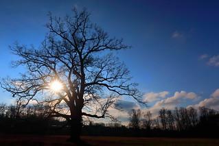 Tree / Strom