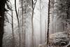 Schieferstein ( I ) (jonny_weissmueller) Tags: alpen winterlandschaft nebel foggy forest mystic wald oberösterreich austria hiking sigma35mm14art nikond750