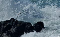tern (Jerryhattric) Tags: boulderbay taylorsmistake bankspeninsula newzealand nz panasoniclumixdmcfz200 summer