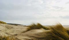 through the dunes (RobertsNL) Tags: focusfriday serene week29 7daysofshooting