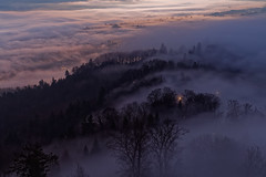 Fog magic (eichlera) Tags: morning dawn bluehour sunrise uetliberg zurich switzerland fog cloud hills mountains trees sunlight