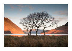 Sunrise at Crummock Water (Dave Fieldhouse Photography) Tags: mellbreak rannerdale crummock crummockwater lake lakes lakedistrict cumbria fells fell trees copse winter nationalpark sunrise dawn morning reflections reflection grasses grass sky clouds still fuji fujifilm fujixt2 wwwdavefieldhousephotographycom countryside outdoors shadows lowfell