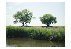 (harald wawrzyniak) Tags: analogue analog film scan kodakportra haraldwawrzyniak filmphotography trees people nature landscape mamiya 645af 2017 italy harald wawrzyniak