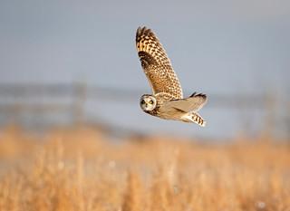 Flight of the Shortie...