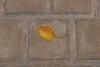 Autumn Notice (Tom Levold (www.levold.de/photosphere)) Tags: fuji fujixpro2 isfahan xf18135mm esfahan autumn blatt herbst leaf