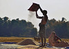 Fruits of hard labour (chinmaymohapatra) Tags: farmer crop paddy india flickr