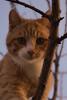 Cucù 😍 (salernolorenza) Tags: d5100 nikon kitten gattino