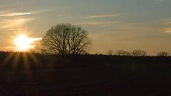 Abendsonne im Winter / evening sun in winter (r.stopable1) Tags: sonnenuntergang sunset abendsonne eveningsun bäume trees sky himmel twillight dämmerung baum tree