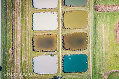 Algae colors the water in aquaculture ponds at the University of Georgia Tifton Campus Coastal Plain Experiment Station. (Remsberg Photos) Tags: farm georgia research tifton outdoors aquaculture agriculture aerial drone highangle wateralgae waterquality growth pollution nutrents treatment water fish usa