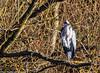 0T4A0628 (2) (Alinbidford) Tags: alancurtis alinbidford brandonmarsh greyheron wildbirds